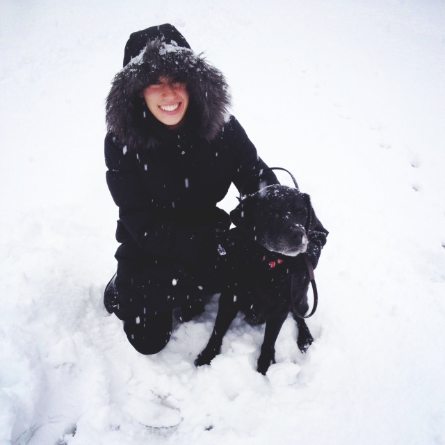 black lab in the snow